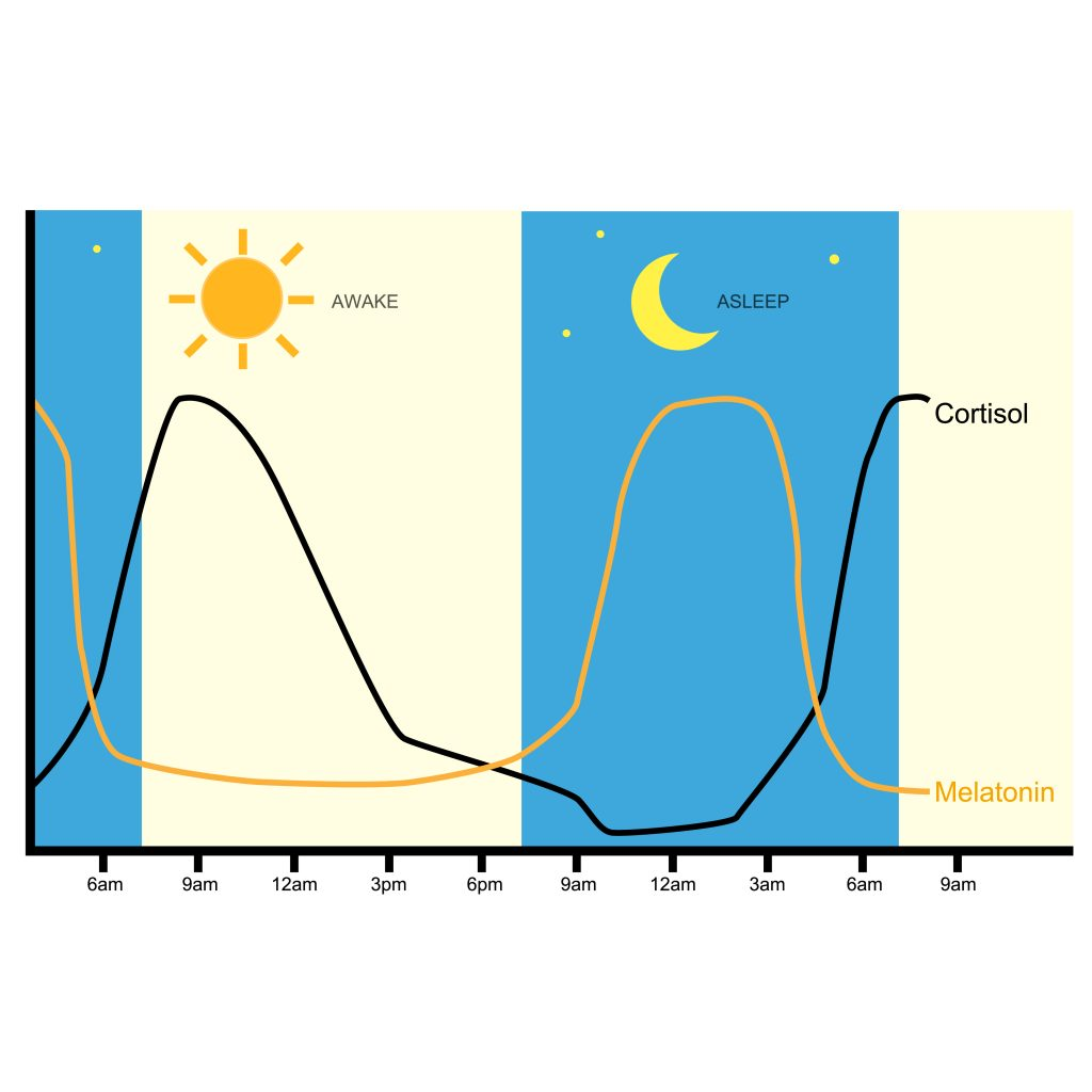 Levels of melatonin throughout the day